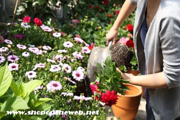 Kışın Çiçek Bakımı Nasıl Olmalıdır?