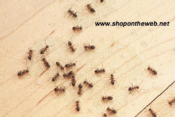 Karıncalardan Kurtulma Yöntemleri