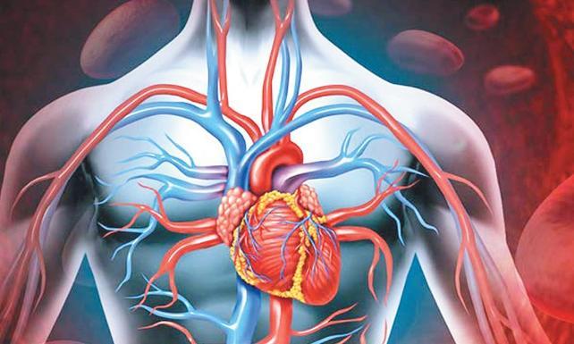 damarlar ve insan sağlığı, kalp sağlığı ve damarlar, damarların kalp sağlığındaki etkisi